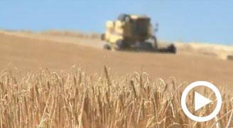 Alianza de Diputación, la Universidad y Caja Rural para impulsar investigaciones en el sector agrícola