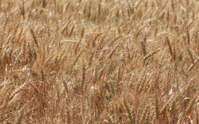 SEAE y la Junta de Castilla y León organizan en Valladolid, los próximos 5 y 6 de octubre, las Jornadas «Innovaciones agroecológicas en cultivos extensivos y legumbres»